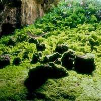 Abandoned Cave Garden Escape