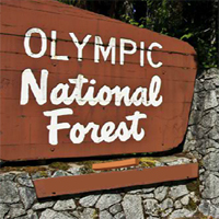 Escape From Olympic National Forest