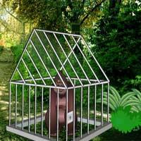 Forest Gorilla Cage Escape