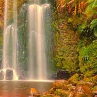 Turkey Waterfall Forest Escape